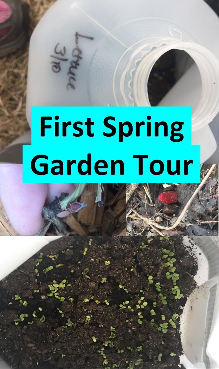 First Spring Garden Tour
