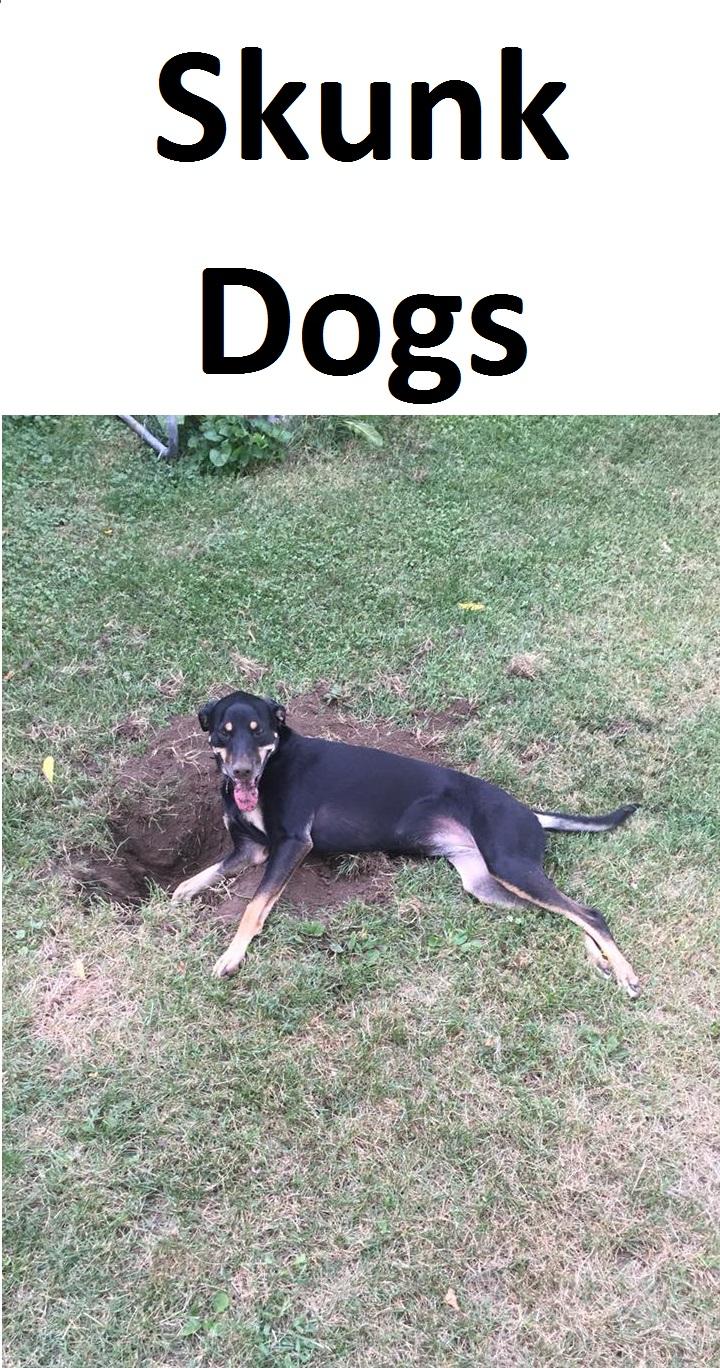 Skunk Dogs