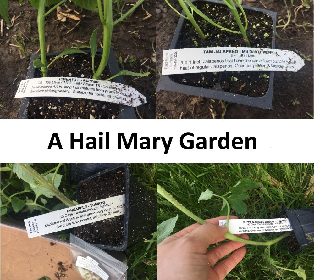 A Hail Mary Garden