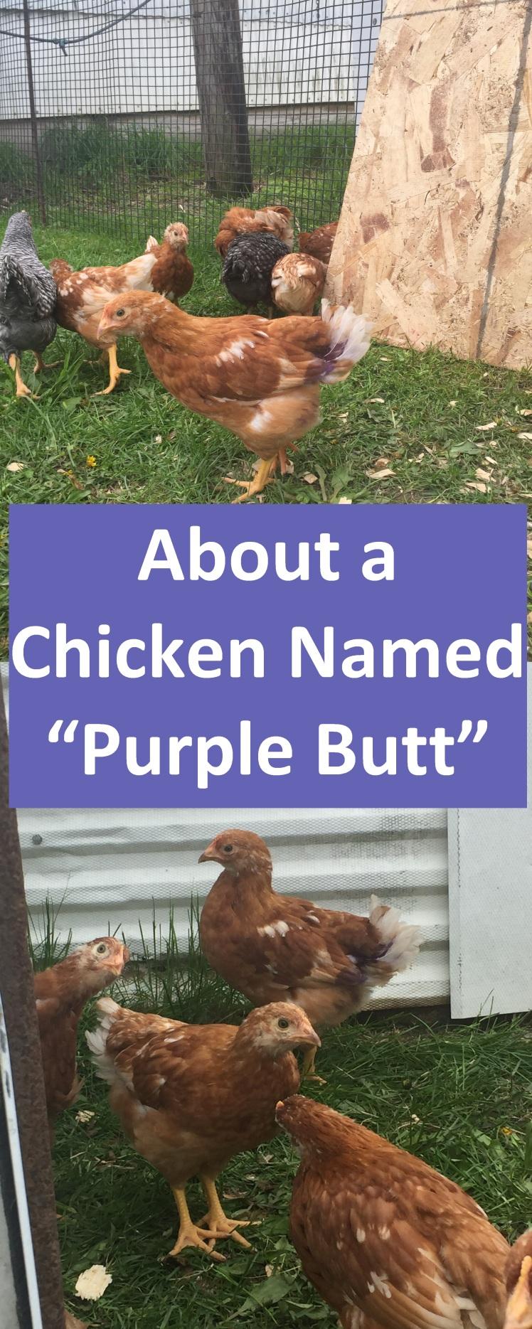 Purple Butt