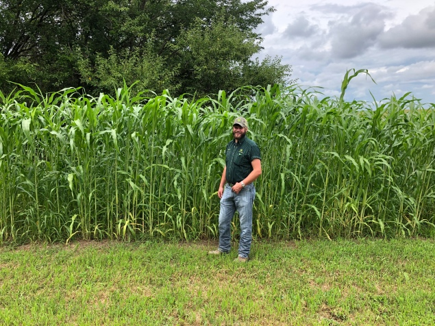 "Colton is pretty proud of the crop - he's 6'2"" and it's already taller than him; soon it will be twice his height!"