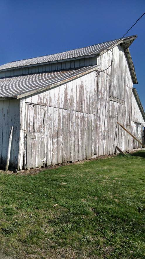 When we were jacking up the posts to level out the barn, that whole, big west wall started swaying in the wind, so Colton had to brace it until we could get it anchored.