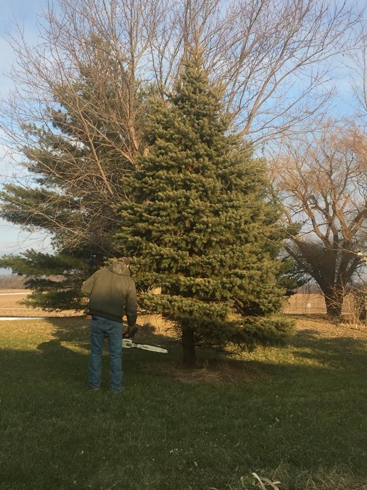 Yard Tree #1