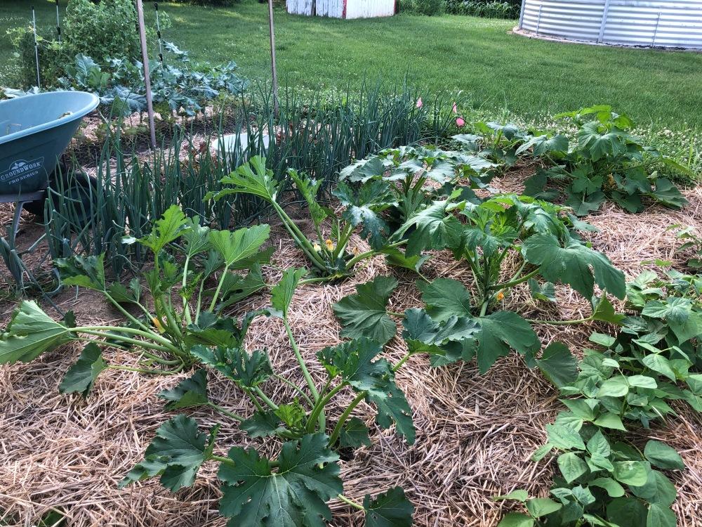 More Garden Glory