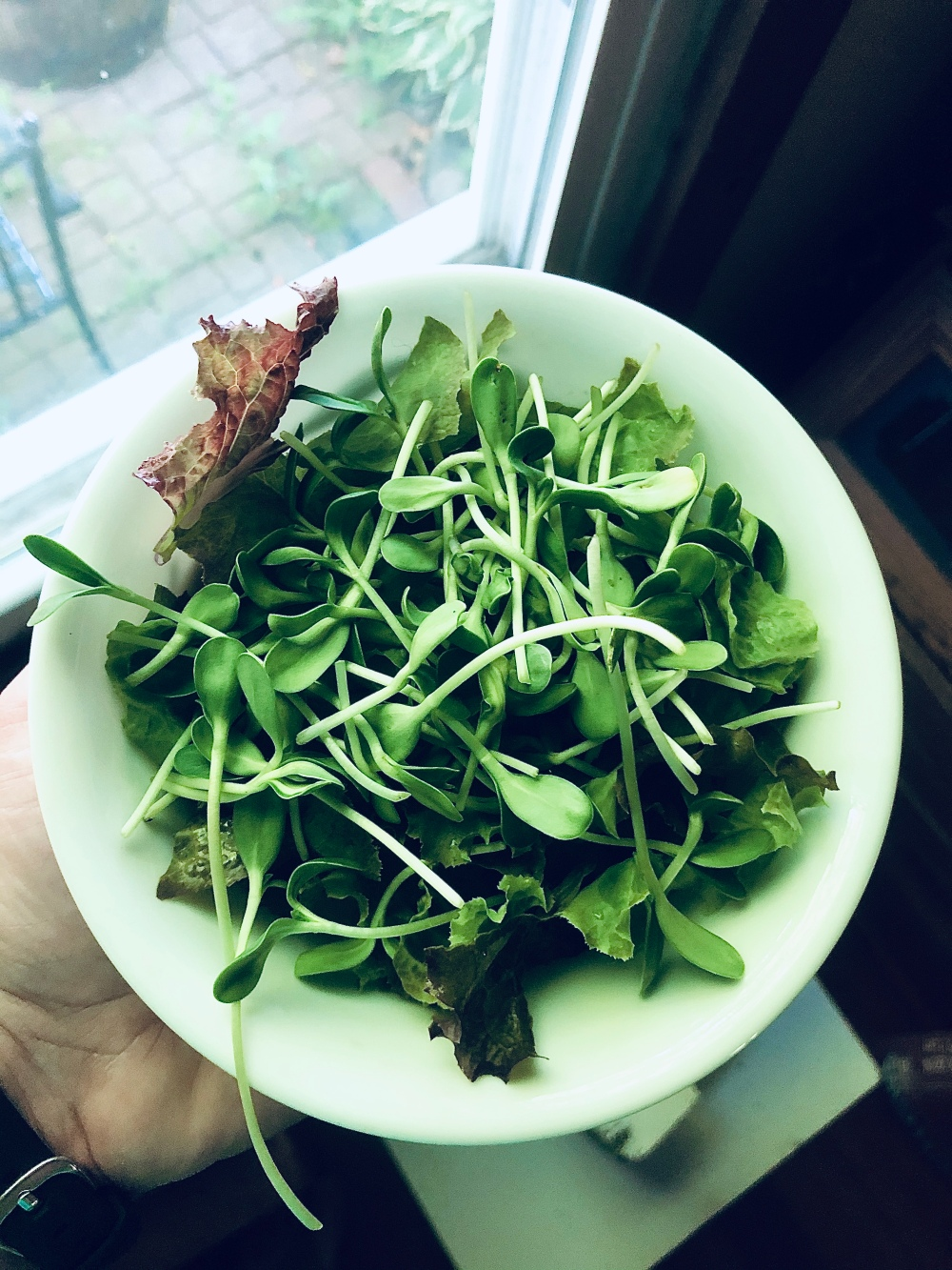 Microgreens for Salad