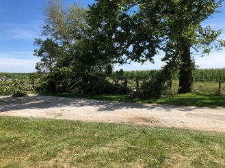 A big chunk of this tree came down. If you know the property, you should see half the barn to the left - but it's completely gone.